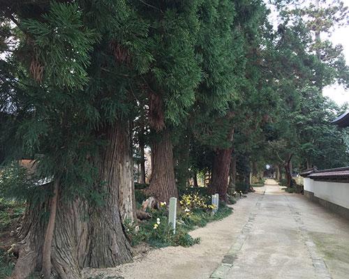 Iohji Temple3
